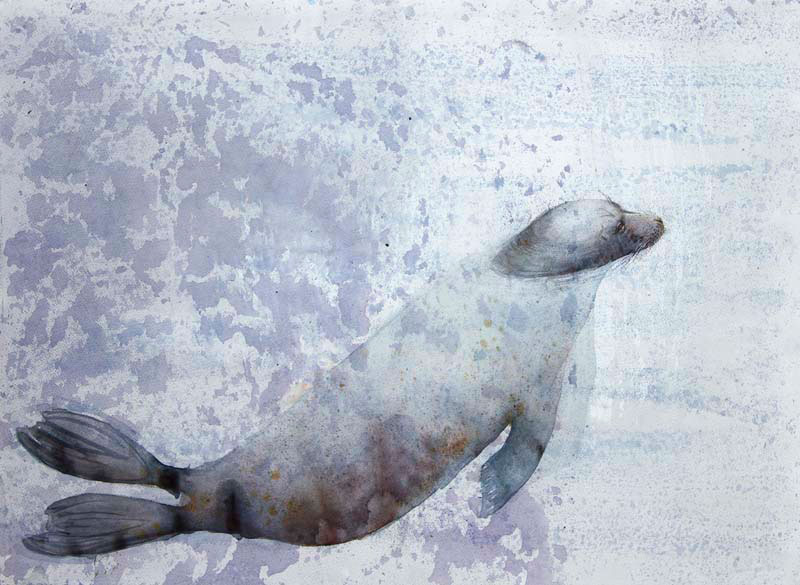 Claire Harkess Tay Seal
