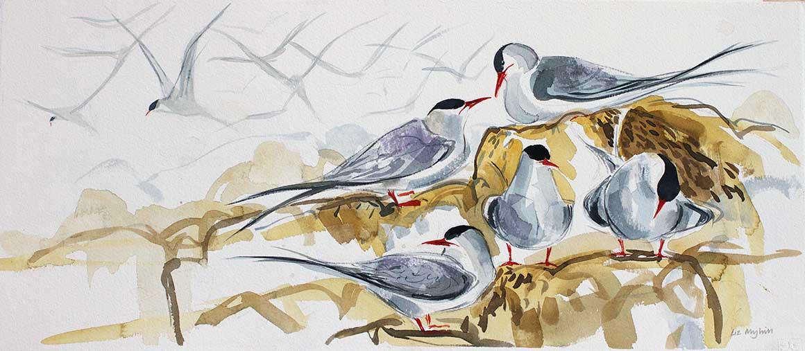Liz Myhill Tern Study 4