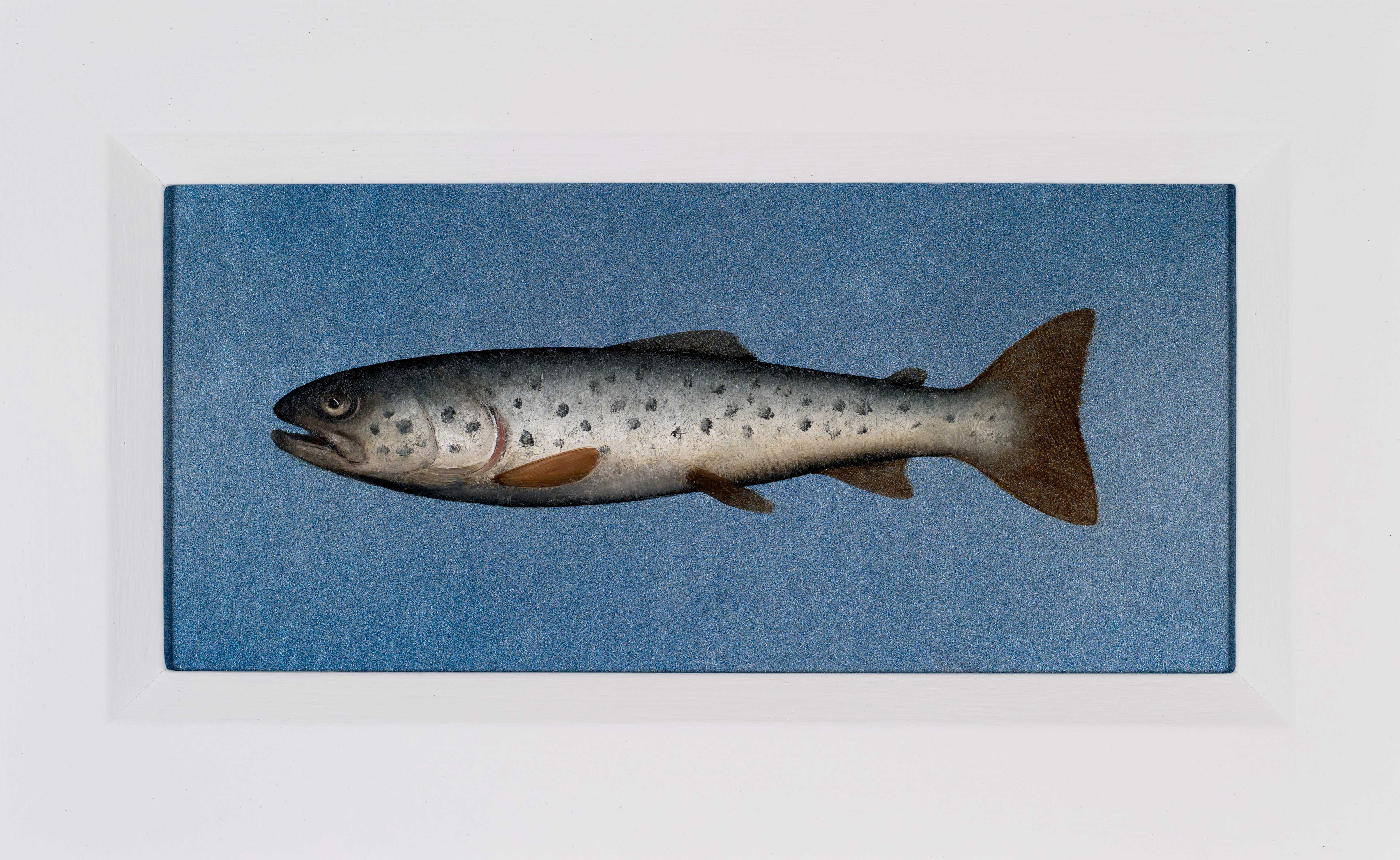 Donald Provan Wee Seatrout